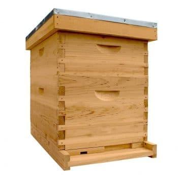 NuBee Hive Starter Bee Hive